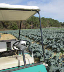 golf cart, broccoli field